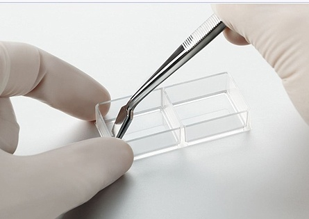 tweezers for cell culture